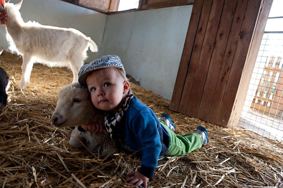 lambs love hugs